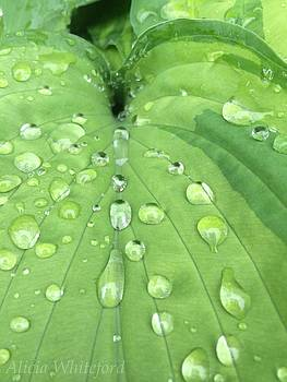 Rain Droplets by Alicia Whiteford