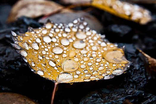 Rain Drops On Autumn Birch Leaf by Brian Boudreau