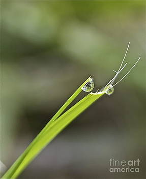 Rain drops on blades of grass by Jennifer Lamanca Kaufman