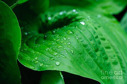 Rod Wiens - Rain Drops