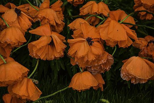 Rain Flowers by Will Burlingham