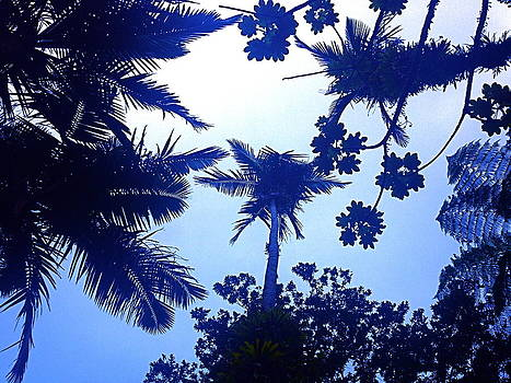 Rain Forest Canopy Blue by Hannah Rose