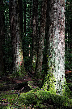 Rain Forest by Colin Sands