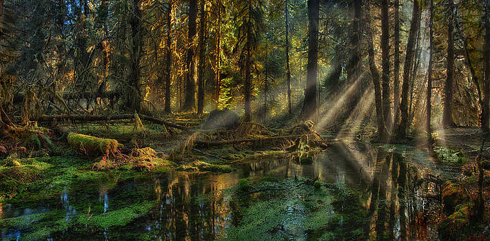 Mary Jo Allen - Rain Forest Sunbeams