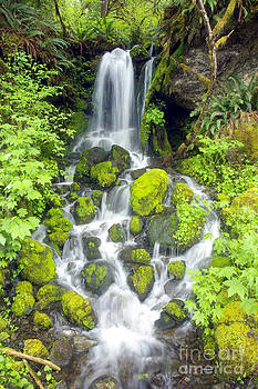 Douglas Taylor - RAIN FOREST WATERFALL