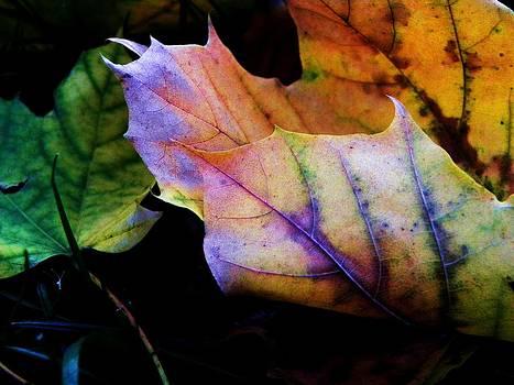 Rainbow Autumn by Christian Rooney