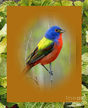 Rainbow Bird by Norma Boeckler