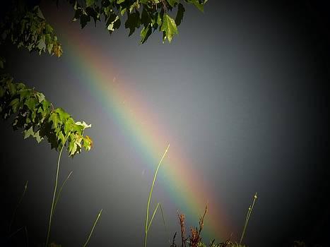 Rainbow By Tree by Joyce Kimble Smith
