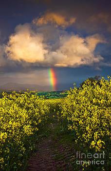 Rainbow Cloud by Derek Smyth