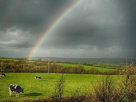 Rainbow cows by Richard Heath