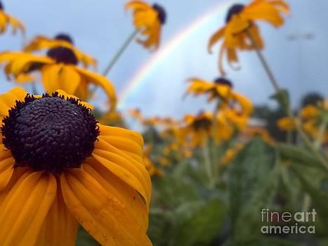 Rainbow by Crissy Boss