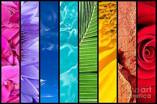 Delphimages Photo Creations - Rainbow
