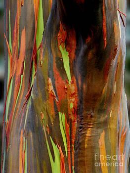 Rainbow Eucalyptus by Eva Kato