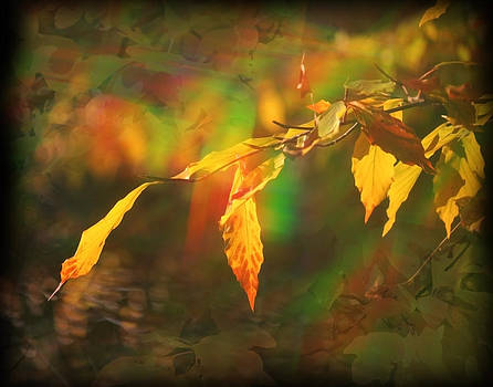 Rainbow Leaves by Andrew Sliwinski