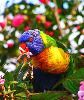 Margaret Saheed - Rainbow Lorikeet With Flower