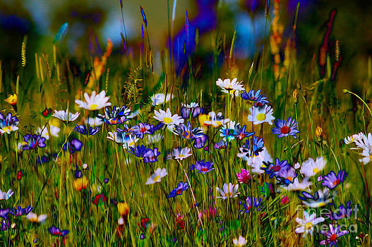 Rainbow Meadow by P Donovan