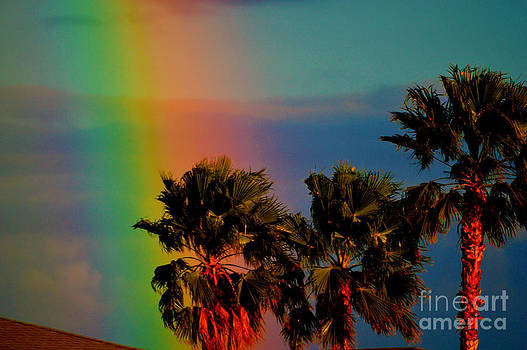 Susanne Van Hulst - Rainbow Palms in Florida