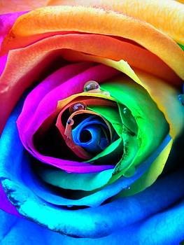 Rainbow Rose by Juergen Weiss