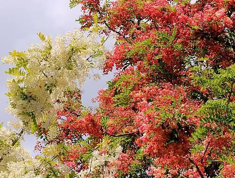 Rainbow Shower Tree by Bonita Hensley