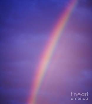 Tim Hester - Rainbow