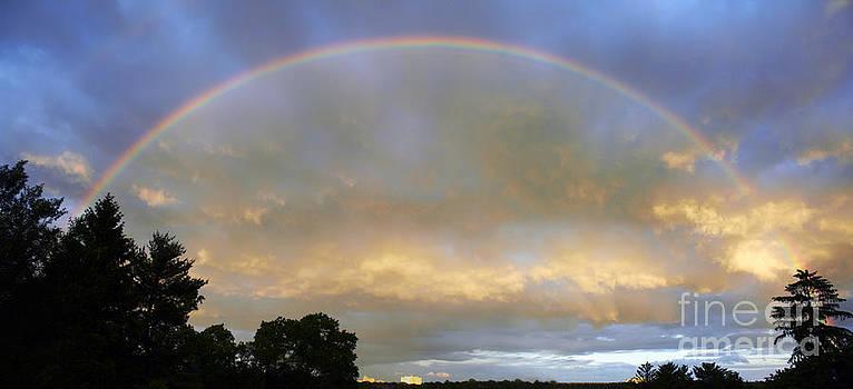 Rainbow by Tony Cordoza