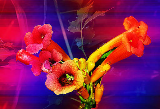 Rainbow Trumpet Vine by Patricia Motley