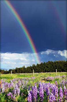 Rainbows and Lupines by Big Horn  Photography