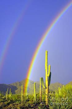 Douglas Taylor - RAINBOWS AND SAGUAROS - LEFT