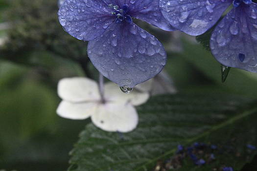 Raindrop by Donald Torgerson