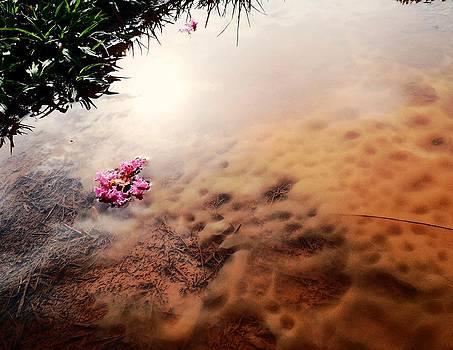 Alesia Hurley - Raindrop Flower Puddle
