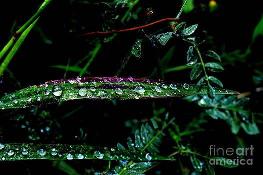 Raindrops Chiaroscuro by Bishopston Fine Art