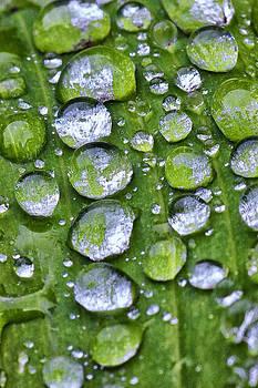 David Pringle - Raindrops