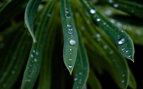 John Daly - Raindrops on Green Leaves