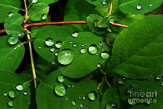 Raindrops on Leaves by Steve Patton