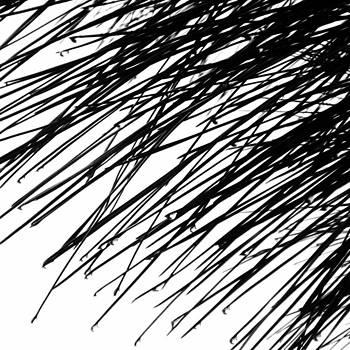 TONY GRIDER - Raindrops on Pine Abstract