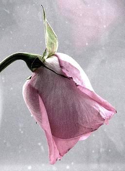 Angela Davies - Raindrops On Roses