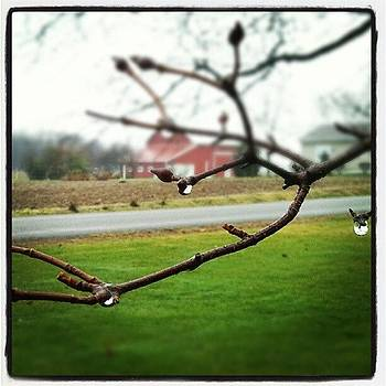 Raindrops #whpwaterdrops by Sandy MacGowan