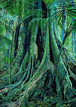 Rainforest Giant by Chris Degenhardt