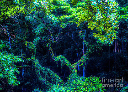 Rainforest in Waimea Valley by Lisa Cortez