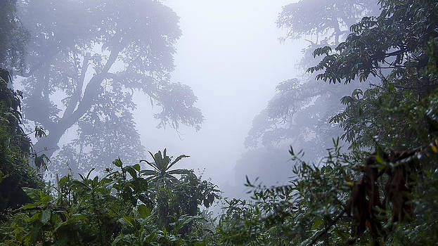 Rainforest by Paul Weaver