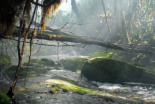 Rainforest Stream by Stefan Carpenter