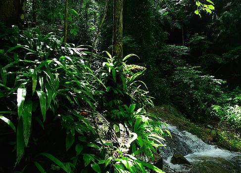 Rainforest by August Timmermans