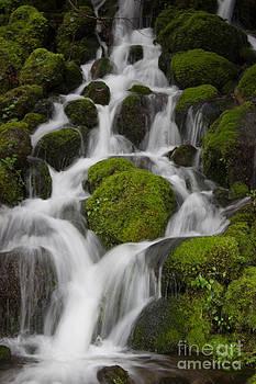 Rainforest Waterfall by Deanna Proffitt