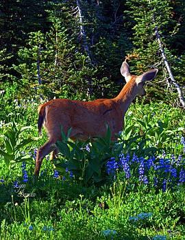Lynn Bawden - Rainier Deer