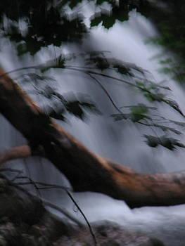 Sandy Tolman - Rainstorm - ivp - 6392