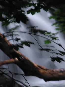 Sandy Tolman - Rainstorm - ivp - 6393
