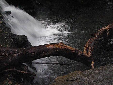 Sandy Tolman - Rainstorm - ivp - 6512