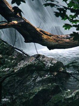 Sandy Tolman - Rainstorm - ivp - 6533