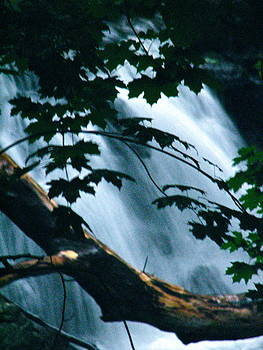 Sandy Tolman - Rainstorm - ivp - 6536