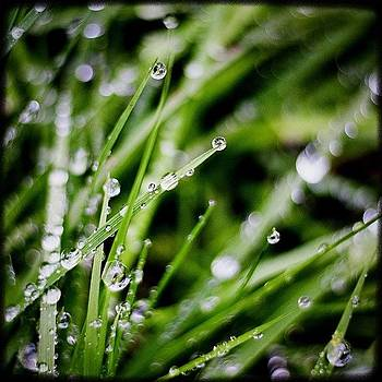 Rainy Day Grass. Bejeweled. #instagood by Kevin Smith